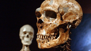 Climate change may have driven a band of Neanderthals to cannibalism
