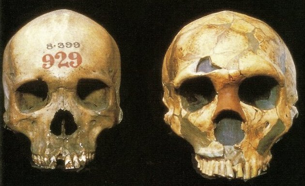 Sleeping Around Gave Early Humans Immune Boost From