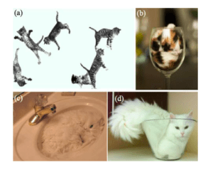 Cats appear to be solid in some contexts, infinitely deformable in others.