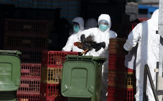 A man in protective gear stuffs a bird into a garbage can.