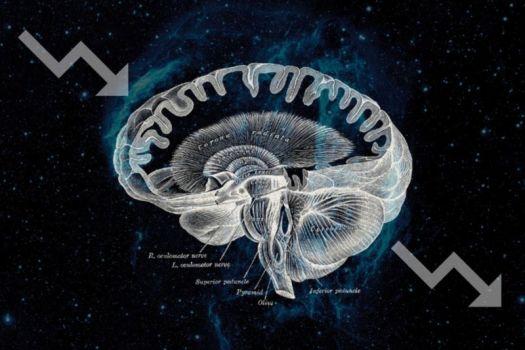 High-contrast diagram of human brain