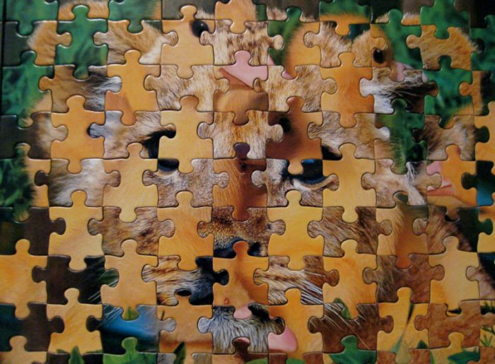 A jumbled jigsaw puzzle, AKA the state of theory in the behavioral sciences.