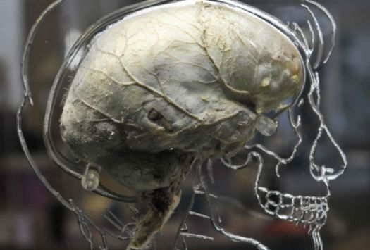 A real human brain suspended in liquid within a human silhouette carved into acrylic, on display at the Bristol Science Centre in England. New research finds more evidence that the brain operates near a critical point.