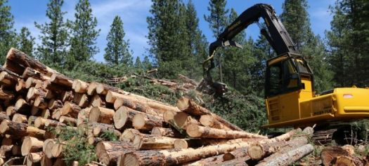 Image of a the harvest of cut down trees.