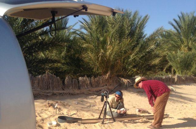 Filming Saharan silver ants near Douz, Tunisia.
