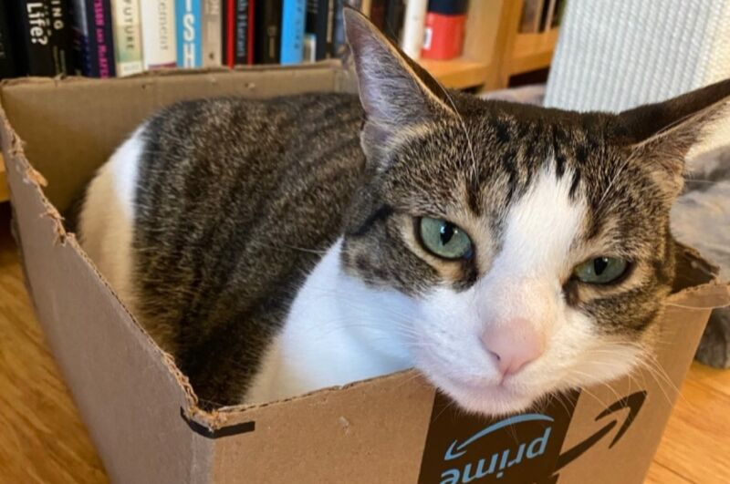 Like most cats, nothing delights Ariel more than an empty box in which to lounge. This might tell us something about feline visual perception of shapes and contours, per a new study in Applied Animal Behaviour Science.