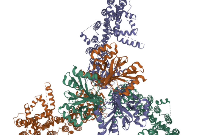 The protein that allows us to sense touch is big and complicated.
