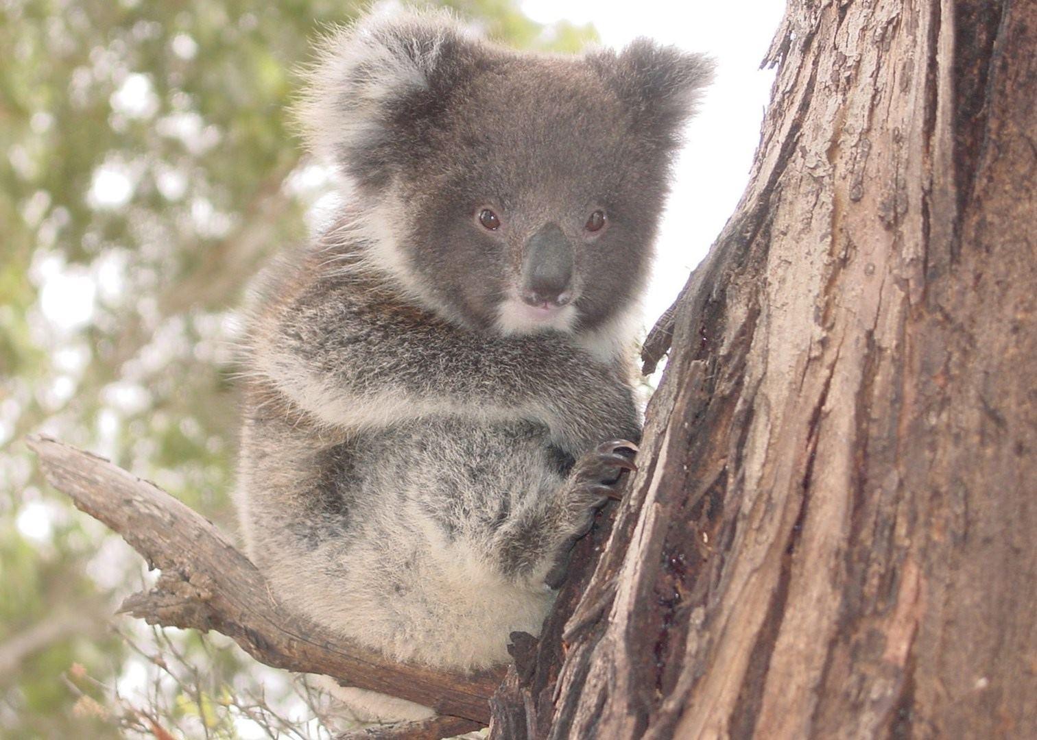 Flinders Chase Amp Kangaroo Island Australia