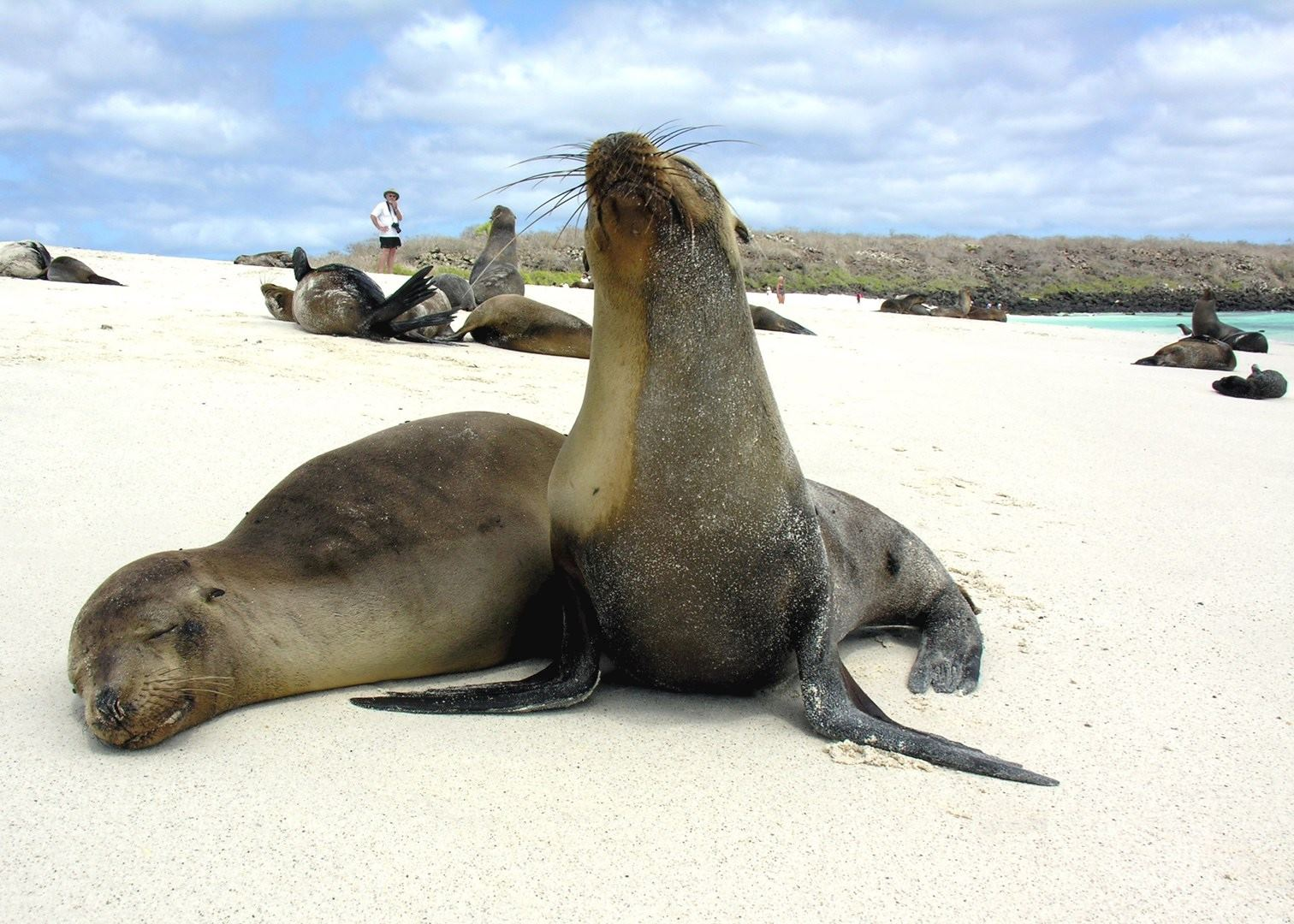 Tailor Made Vacations To The Galapagos Islands