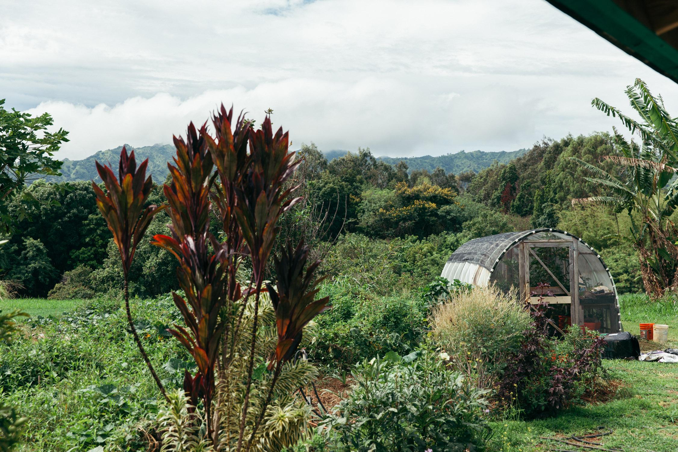 Kauai Botanical Gardens Jurassic Park