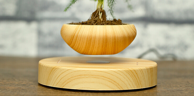 Floating Bonsai Where Buy