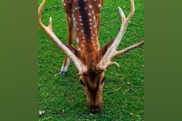 7 rare deer found dead in Pak's Bahawalpur Zoo