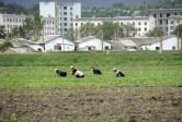 north korean farmers are denied surplus harvest again this year
