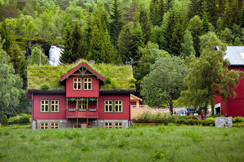 casa con tetto verde tra gli alberi