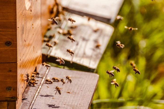 Cabañas con abejas son una nueva terapia anti estrés en Rumania
