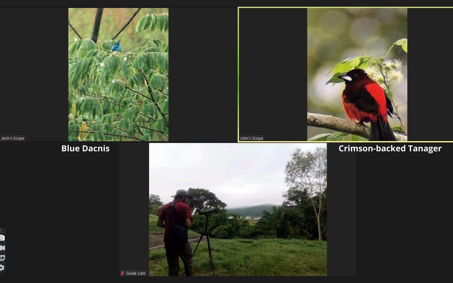 birding by zoom