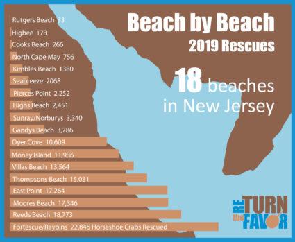 beach by beach 2 e1579623026288