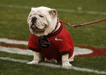 ATHENS, GA - NOVEMBER 29:  Georgia Bulldogs mascot UGA VII sits on the field before the game against the Georgia Tech Yellow Jackets at Sanford Stadium on November 29, 2008 in Athens, Georgia.  The Yellow Jackets defeated the Bulldogs 45-42.  (Photo by Mi