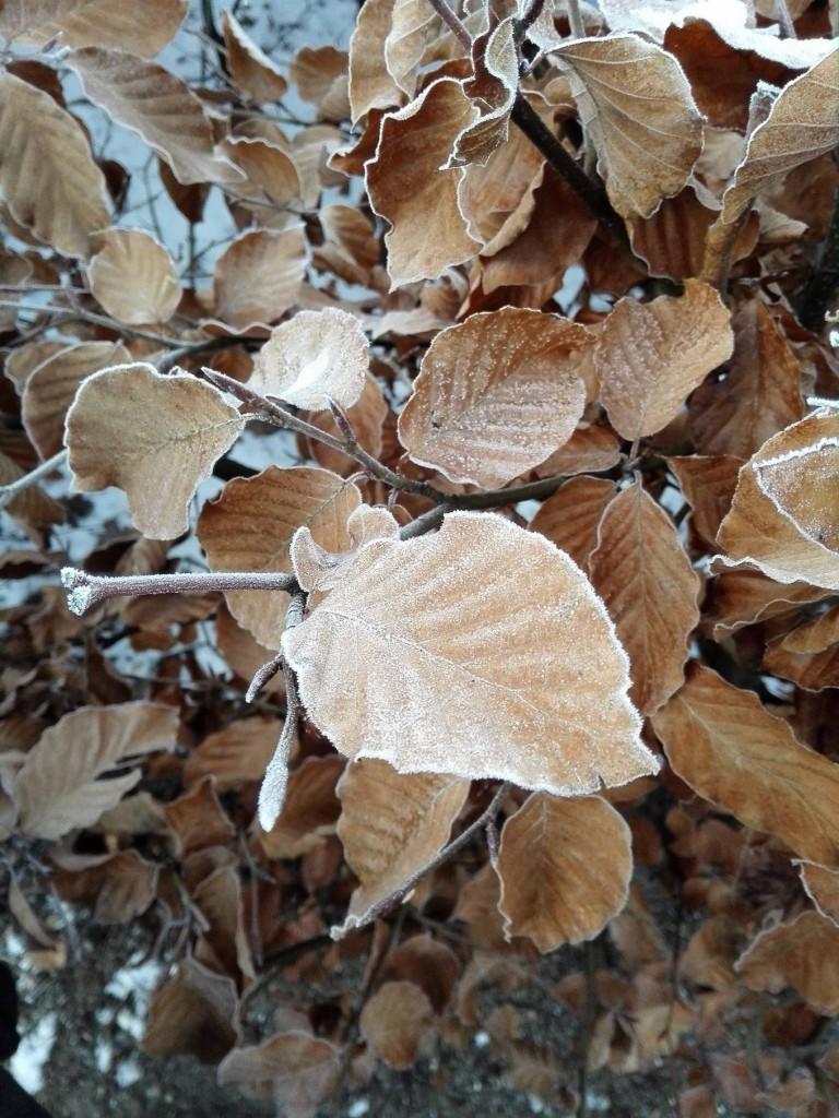 brown leafs