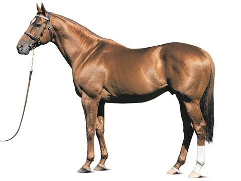 Animal Kingdom   Stallion Register Online