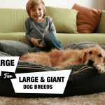 6 Extra Large Dog Beds For Xl Xxl Dog Breeds Reviewed