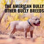 American Bully Versus Other Bully Breeds Ancestors And Differences