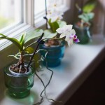 Mini Orchids Care Guide With Pictures Brilliant Orchids