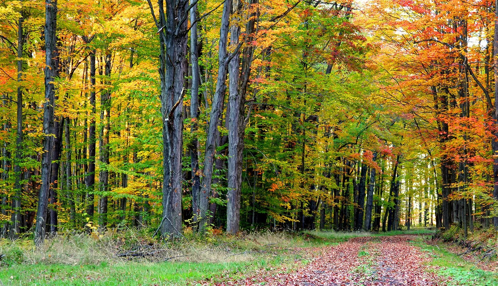 Steve nix/about.com it has been determined by the united states forest service that nearly 80 percent. Deciduous Forest Definition Climate Characteristics Britannica