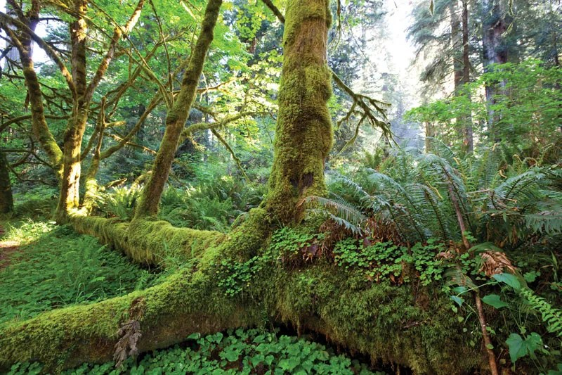 The temperate rainforest is a biome added by biomes o' Temperate Rainforest Botany Britannica