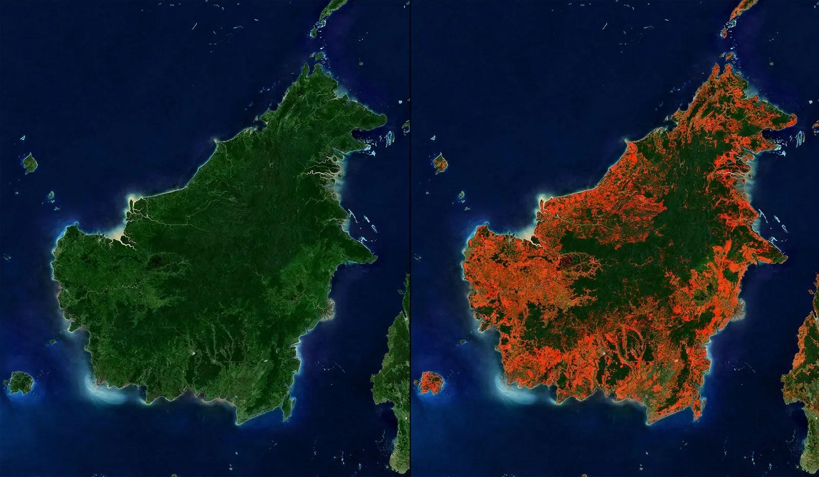 Long term effects of deforestation 5. Deforestation Effects Britannica