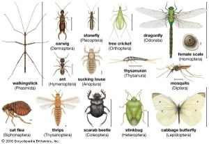 insect   Definition, Facts, & Classification   Britannica