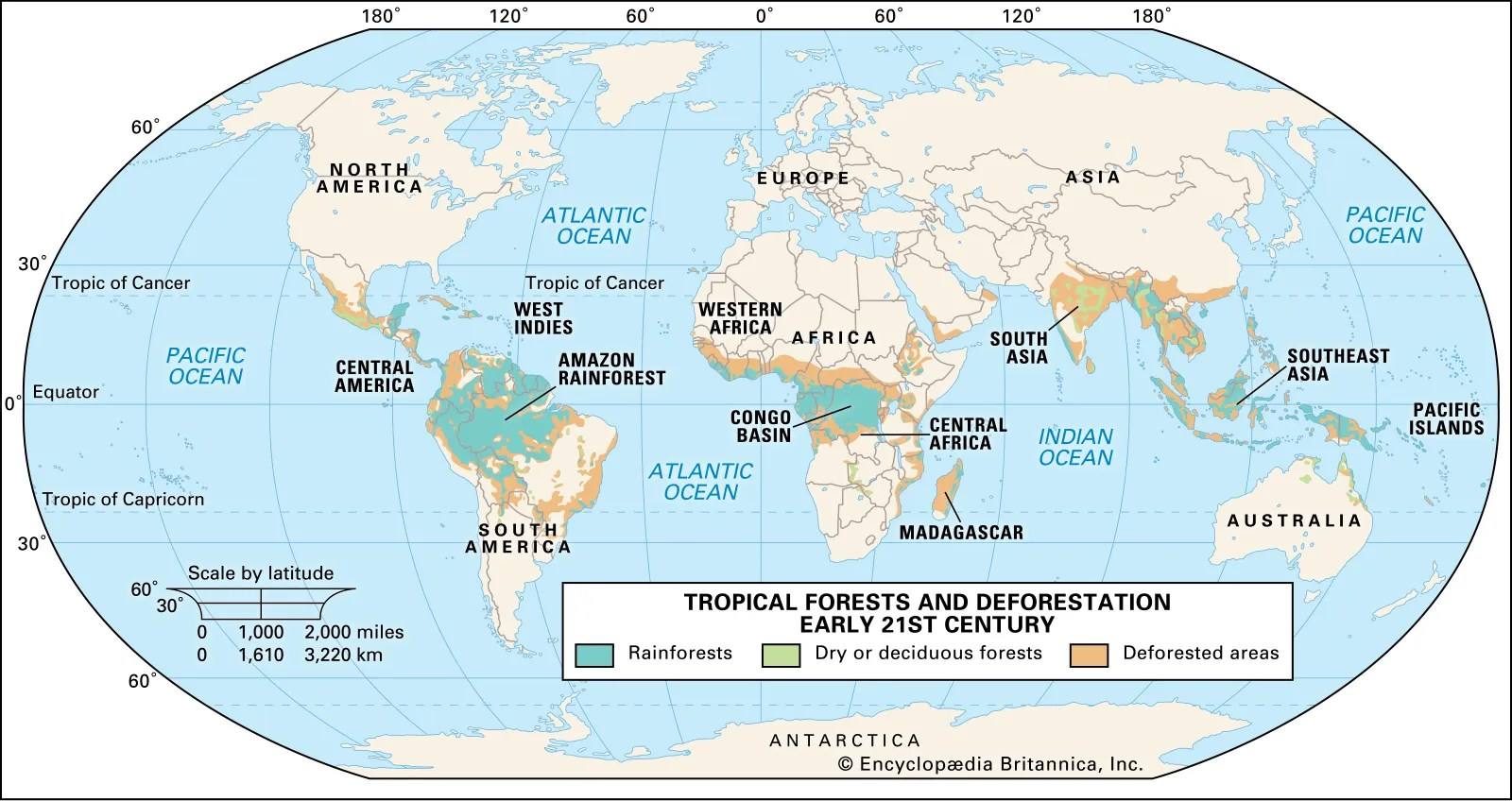 While rainforests only cover 5 percent of the earth's total land area, they are home to roughly. Rainforest Definition Plants Map Facts Britannica