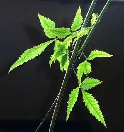 Blatt Pflanzenanatomie   Biologie Ph.D