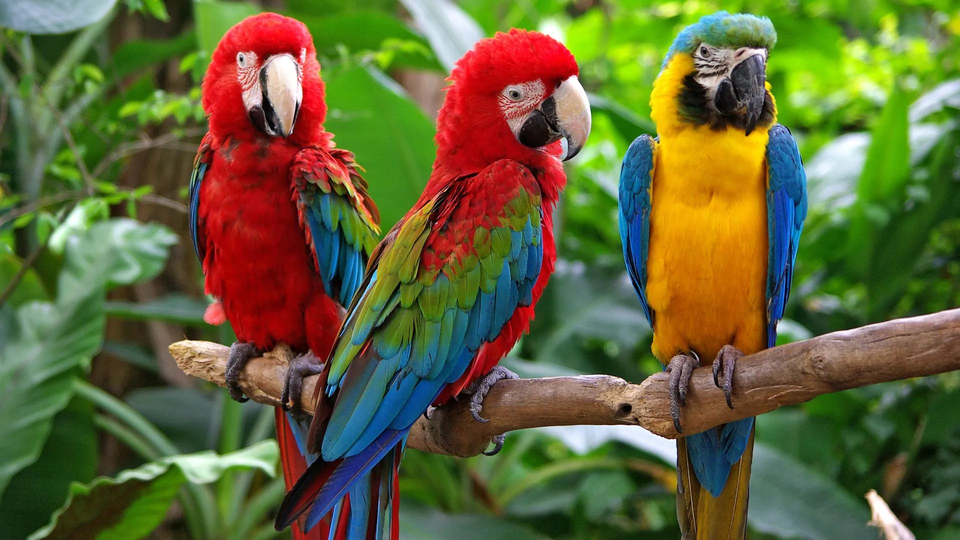 Interesting Facts About Parrot Species Revealed