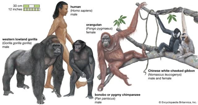 types of primates