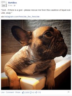 social media marketing plan barkbox instagram facebook post
