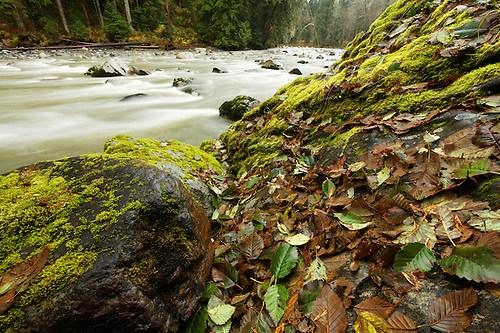 Autumn leaves on boulders, Stillaguamish River, Washington Cascade Mountains