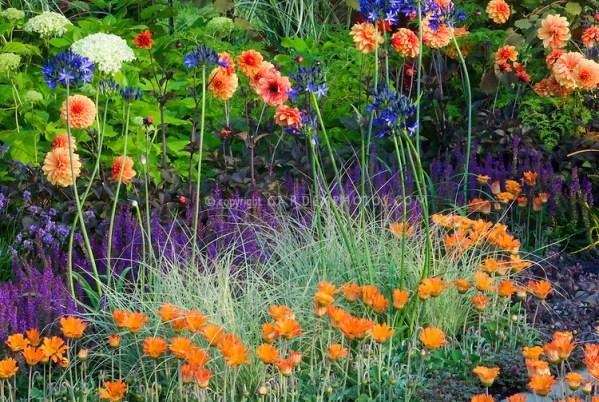 purple and orange flower garden Pin by Mary Jukuri on purple lavender violet | Pinterest