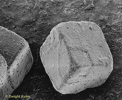 Electron microscope image of a salt crystal