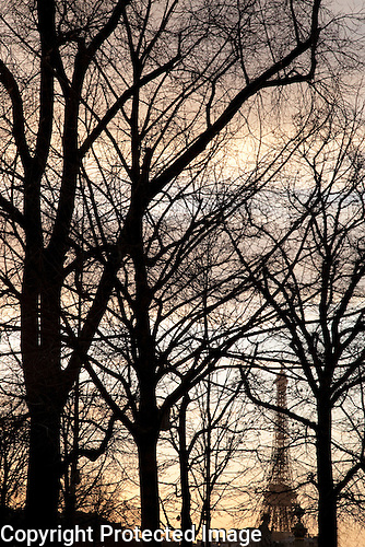 Winter Trees and Eiffel Tower, Pari