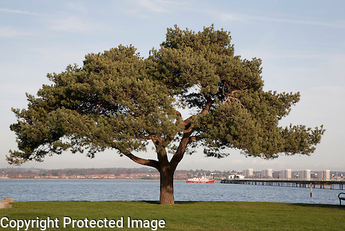 Tree and Pier in Hythe, Southampton, UK