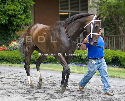 Remark - rare brindle Thoroughbred/Belmont 6.13.10 ...