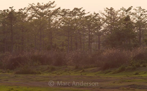 Chitwan National Park | Marc Anderson Photography