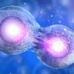 Autologous And Allogeneic Stem Cell Transplants Ctca