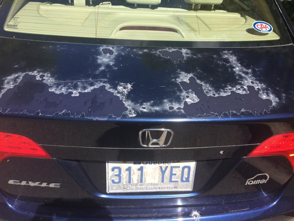 2006 Honda Civic Clearcoat And Paint Problems 152 Complaints