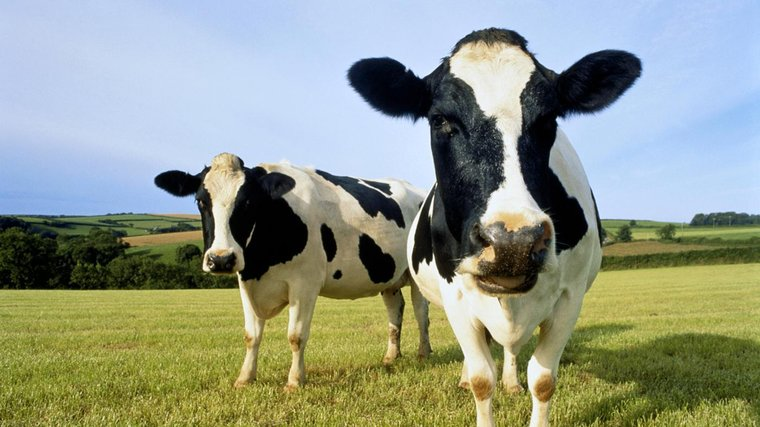 Australia-[Update] 59% premium!Mengniu Dairy intends to acquire Bellamy for 15 billion Australian dollars-Australia China Focus-Australia Chinatown-Australia Finance Australia Finance Australia Listed Companies Information Securities and Foreign Exchange Market Analysis and Commentary