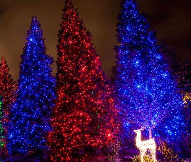 Blue Outdoor Christmas Lights Jpg