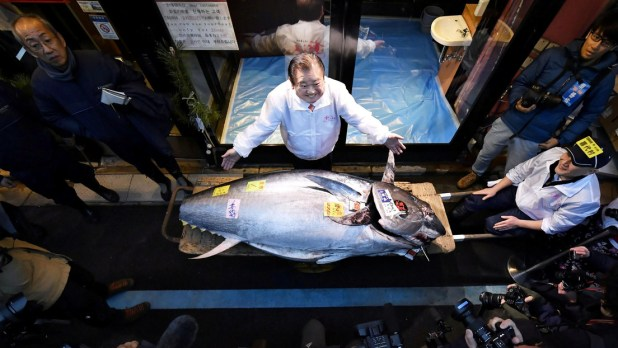 El rey del atún: compró el enorme pescado por 1,8 millones de dólares