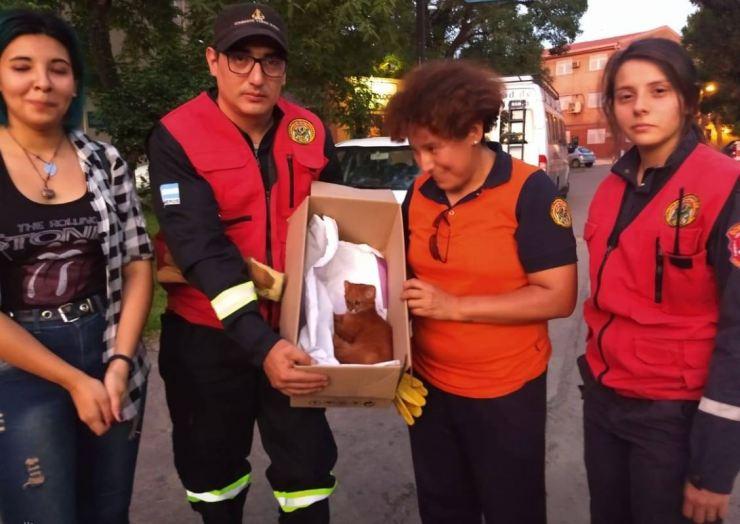 El pequeño puma tras ser rescatado por la fundación