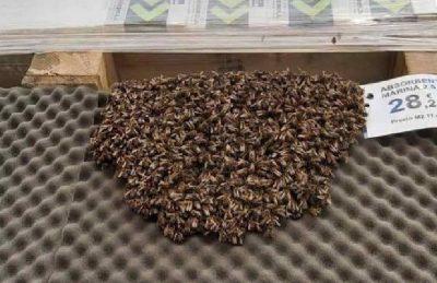 Evacuaron un local de un shopping tras encontrar un enjambre con más de 3.000 abejas